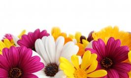 Make Mom's Bouquet Kids' Event!