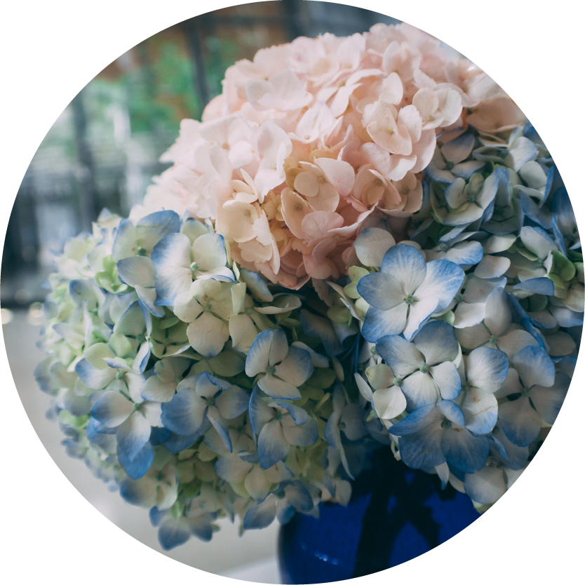 Hydrangea Flower Bouquets for Chicago Delivery