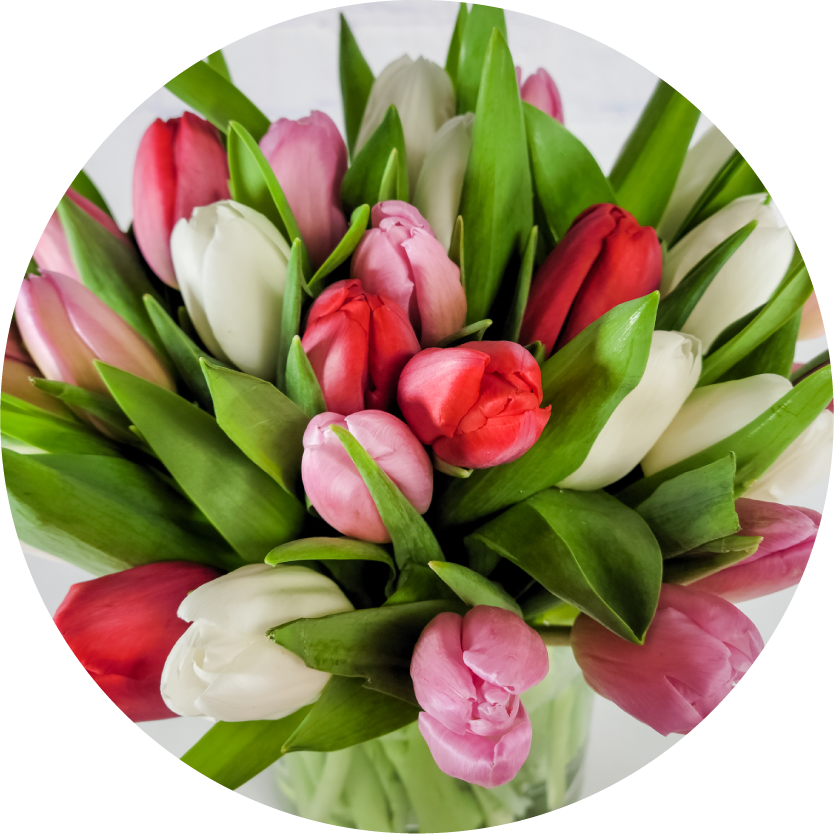 Tulip Flower Bouquets for Chicago Delivery