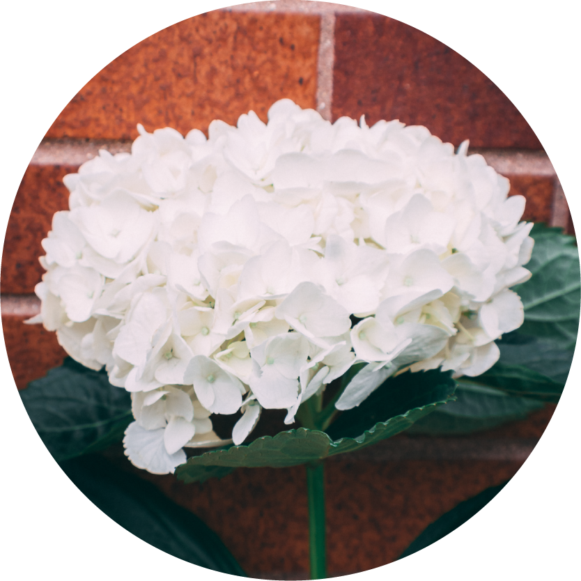 White Flower Bouquets for Chicago Delivery