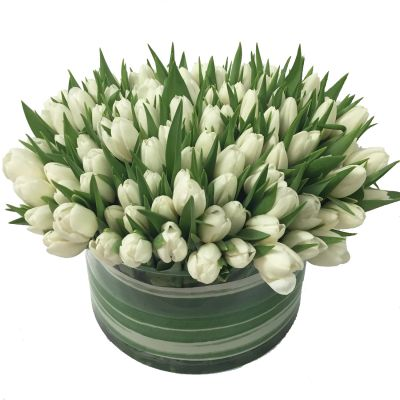 White Tulips Luxe
