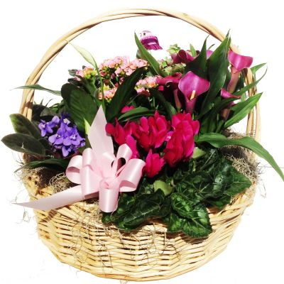 Online delivery of plants and blooming plants Order plants in