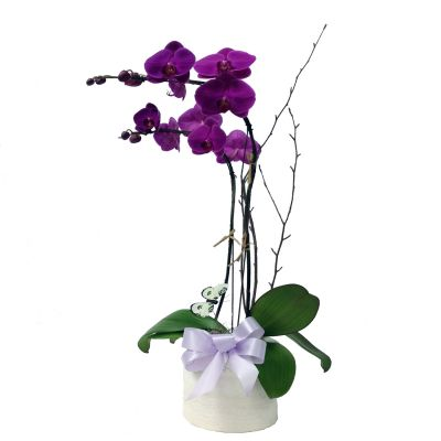 Double Phaleanopsis Orchid - Color Options Available
