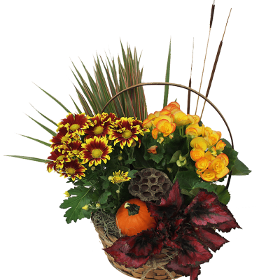 Fall European Dish Garden (Medium)