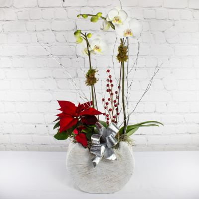 Holiday Orchid Planter