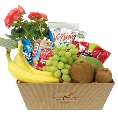 Health Nut Basket with a Plant