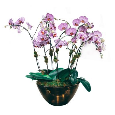 Orchid Planter Deluxe