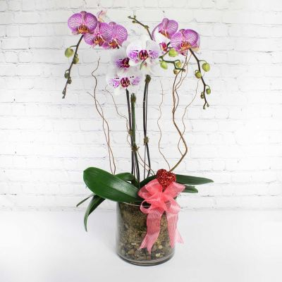 Cupid's Orchid Planter